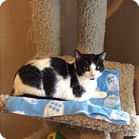 Adopt A Pet :: Stevie - Duluth, GA