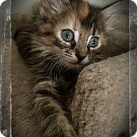 Adopt A Pet :: Mousette - Richmond, VA