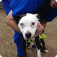 Adopt A Pet :: Eva - Garwood, NJ