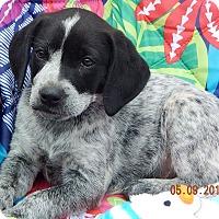 Adopt A Pet :: Rue (8 lb) - SUSSEX, NJ