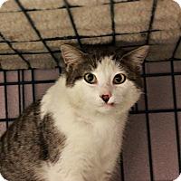 Adopt A Pet :: Dodger - No Adoption Fee! - New Richmond,, WI