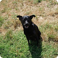Adopt A Pet :: Padme - Fort Worth, TX