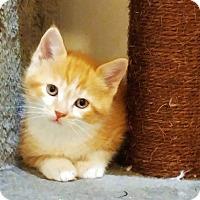 Adopt A Pet :: Prince Eric - Richmond Hill, ON