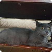 Adopt A Pet :: Nina - Minerva, OH