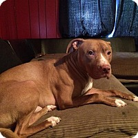 Adopt A Pet :: Zeus - Middletown, OH