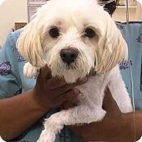 Adopt A Pet :: Pooh - Dawson, GA