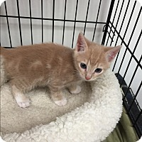 Adopt A Pet :: Autumn - Tehachapi, CA