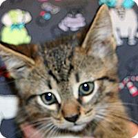 Adopt A Pet :: Bradley - Wildomar, CA
