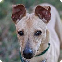 Adopt A Pet :: Jeffrey - Brattleboro, VT