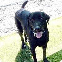 Adopt A Pet :: Gunner #2 - Buckeystown, MD