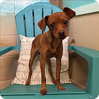 Adopt A Pet :: Red - Riverside, CA