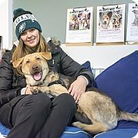Adopt A Pet :: Tunde Adebimpe - Jersey City, NJ