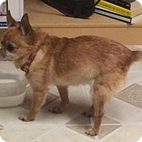Adopt A Pet :: Chiquita - Livonia, MI