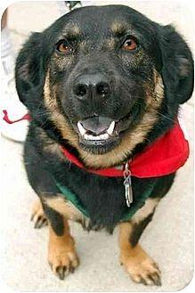 Terrier (Unknown Type, Medium) Mix Dog for adoption in Fairfax Station, Virginia - Bayley