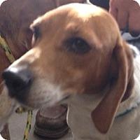 Adopt A Pet :: Tee - Canoga Park, CA