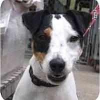 Adopt A Pet :: Maverick - Omaha, NE