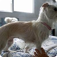 Adopt A Pet :: Izzy - Toronto, ON