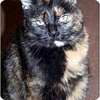 Adopt A Pet :: Demo - Racine, WI