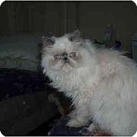 Adopt A Pet :: Midori - Beverly Hills, CA