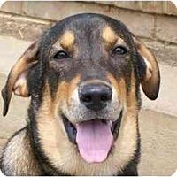 Adopt A Pet :: Calvin - Albany, NY