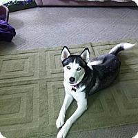 Adopt A Pet :: Dali - Elkhart, IN