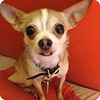 Adopt A Pet :: Carmela - Dayton, OH