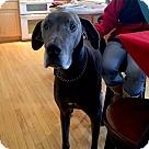 Adopt A Pet :: Caesar - Courtesy Listing