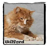 Adopt A Pet :: Wilford - Warren, PA