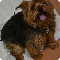 Adopt A Pet :: Chewy - Ogden, UT