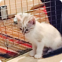 Adopt A Pet :: Jennie - Byron Center, MI