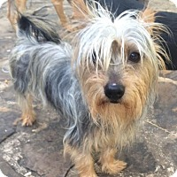 Adopt A Pet :: Cowboy Joe - Adoption pending - East Hartford, CT
