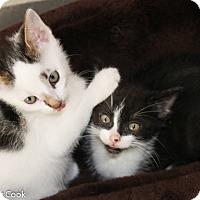 Adopt A Pet :: Seattle Slew - Ann Arbor, MI