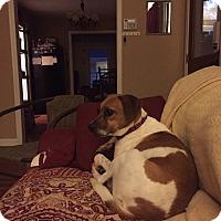 Adopt A Pet :: Grace - Homewood, AL