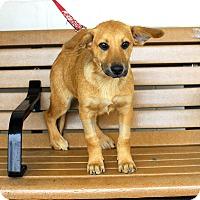Adopt A Pet :: Jinger-Adopted! - Detroit, MI