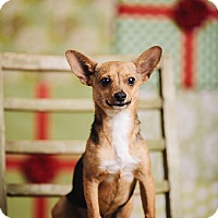 Adopt A Pet :: Brando - Portland, OR