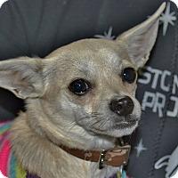 Adopt A Pet :: Flora - Meridian, ID