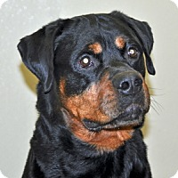 Adopt A Pet :: Gunther - Port Washington, NY