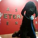 Adopt A Pet :: Onyx