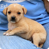 Adopt A Pet :: Peebles~adopted! - Glastonbury, CT