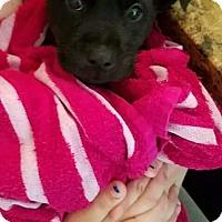 Adopt A Pet :: Lucas - Morganville, NJ
