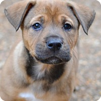 Adopt A Pet :: Brandy - Enfield, CT