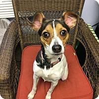 Adopt A Pet :: Suzie - Elyria, OH
