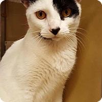Adopt A Pet :: Mazie - Jackson, NJ