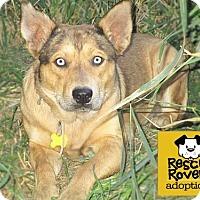 Adopt A Pet :: Luk - Salt Lake City, UT