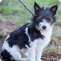 Adopt A Pet :: Toska - San Diego, CA