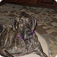 Adopt A Pet :: Ryder - Bradenton, FL