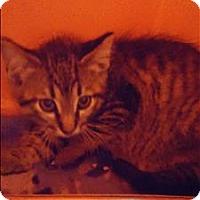 Adopt A Pet :: Ferris - Duluth, MN
