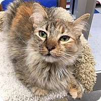 Adopt A Pet :: Ginger - San Francisco, CA