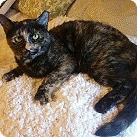 Domestic Shorthair Cat for adoption in Atlanta, Georgia - Sookie