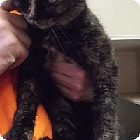 Adopt A Pet :: 20947 - Cheboygan, MI